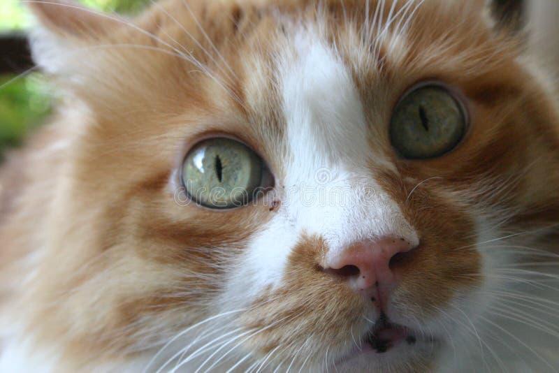 Download Cat stock image. Image of eyes, pleasant, animal, sweet - 1587973