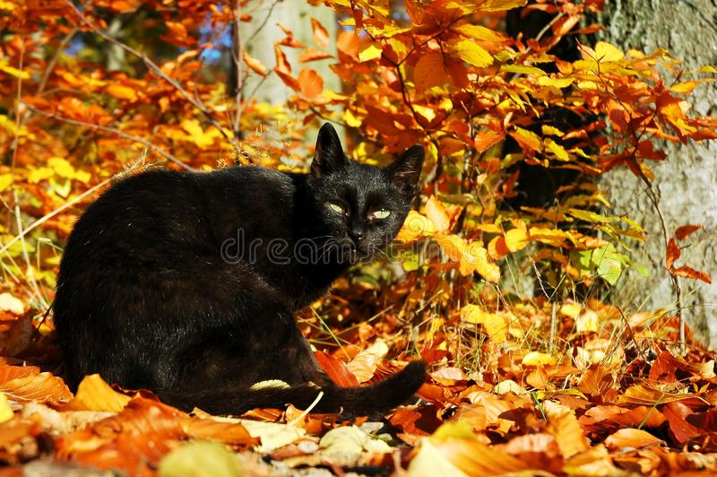 Download Cat stock image. Image of autumn, fall, foliage, leaves - 16571845