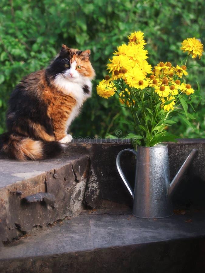 Download Cat stock photo. Image of petal, funny, fresh, beautiful - 16944568