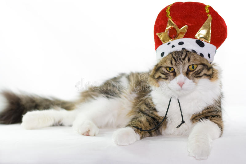 Download Cat stock photo. Image of mammal, funny, kingly, feline - 18728754