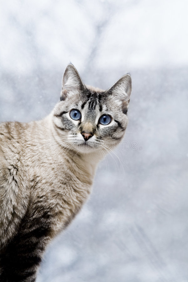 Download Cat Stock Images - Image: 1884764