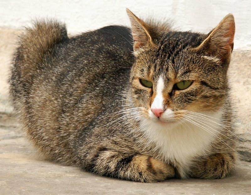 Download Cat stock image. Image of animal, muzzle, feline, ears - 191779