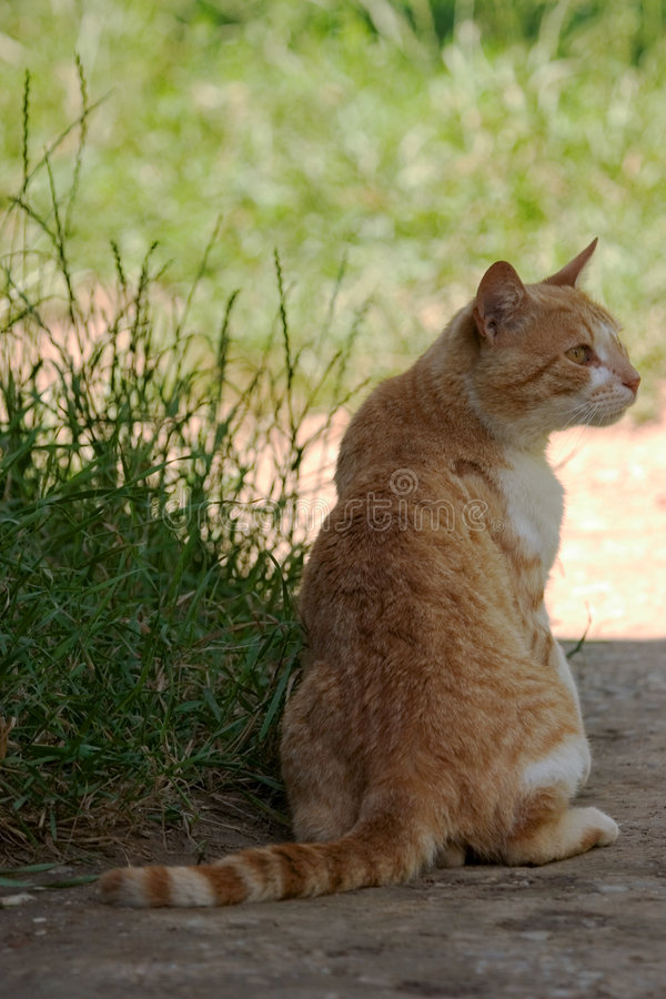 Download Cat stock image. Image of feline, kitty, lick, orange, whisker - 192003