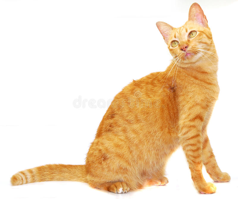 Download Cat stock photo. Image of cute, pretty, concern, soft - 19664384
