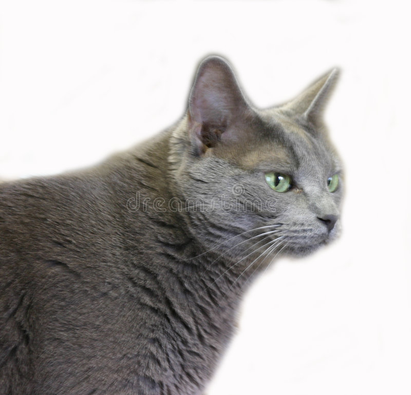 Download Cat 2 stock photo. Image of gray, meow, kitty, animal, green - 114484