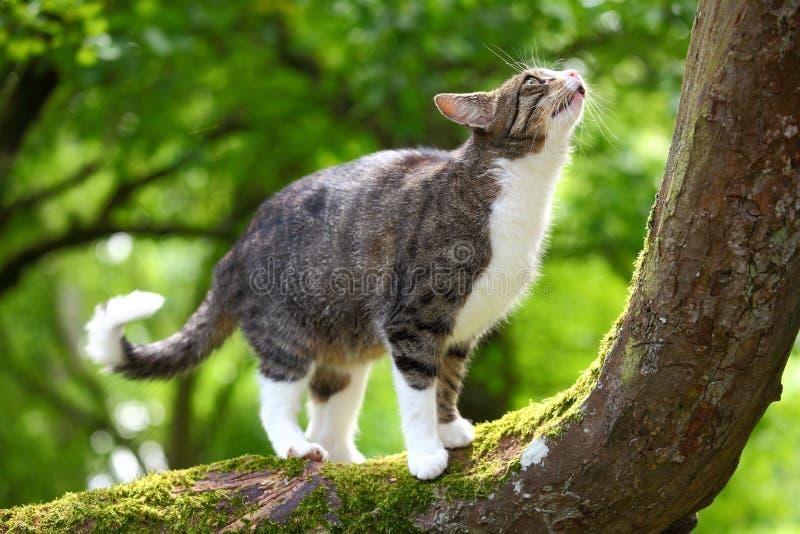 Download Cat Stock Photos - Image: 20432533