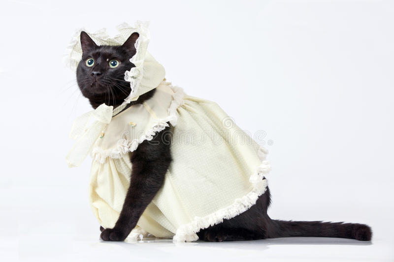 Download Cat stock photo. Image of dress, clothing, kitty, white - 20831488