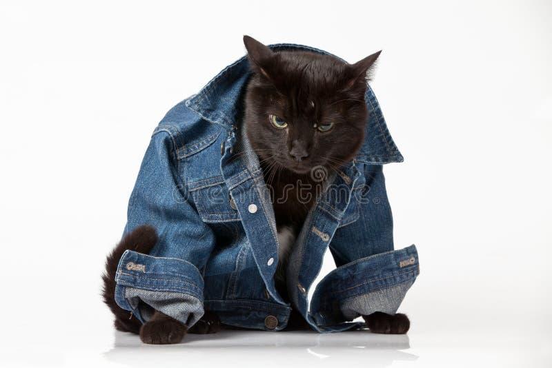 Download Cat stock photo. Image of animal, white, glamor, background - 20831586