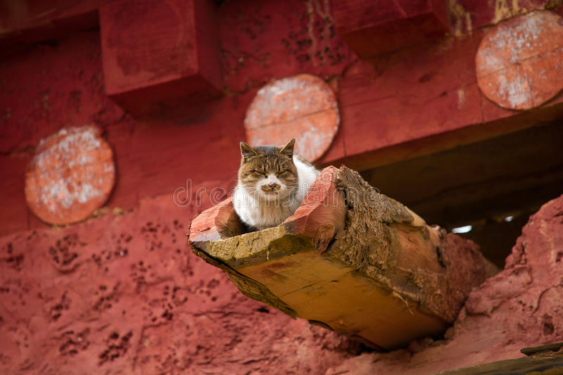 Download Cat stock photo. Image of life, idyll, coloured, lifestyle - 21535224