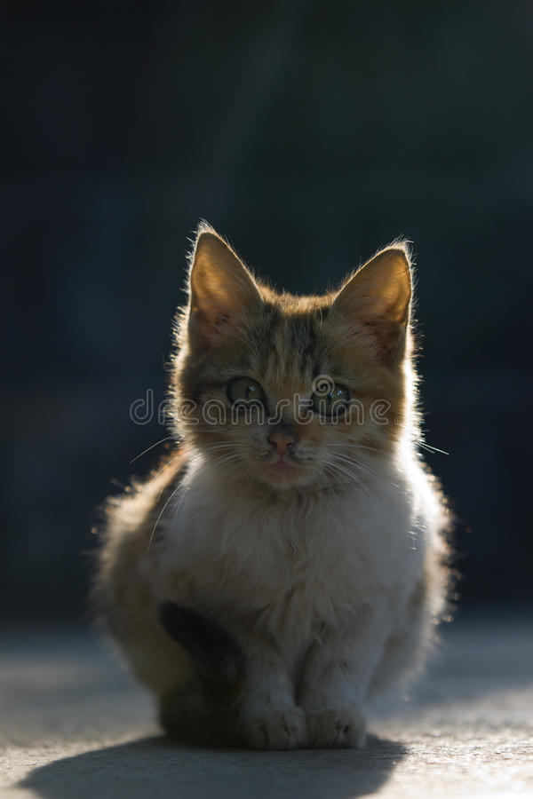 Download Cat stock image. Image of lonely, eyes, look, brown, animal - 22635549
