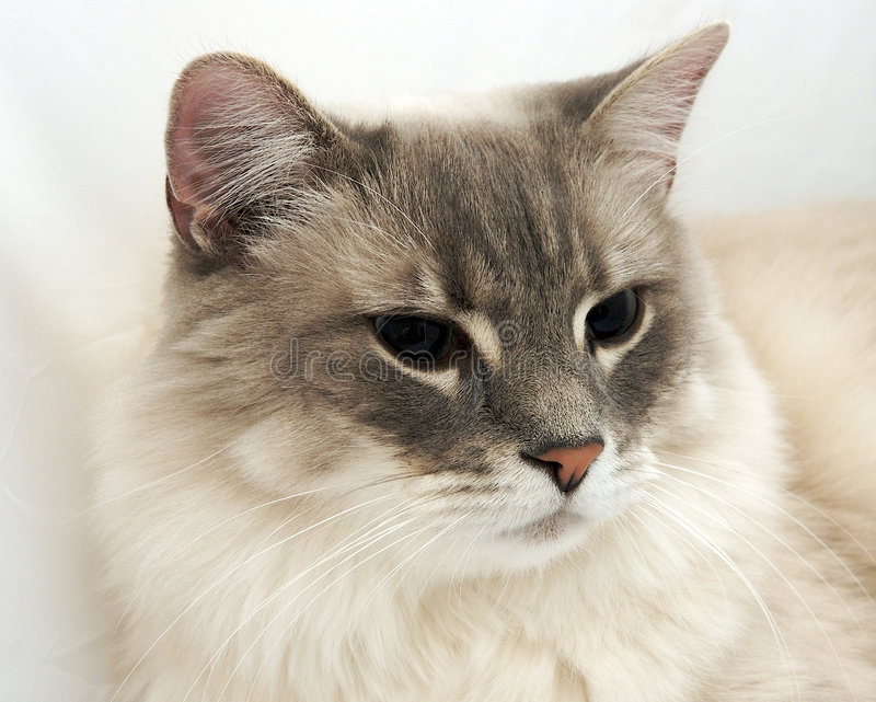 Cat. A close up of a cat on a white background stock images