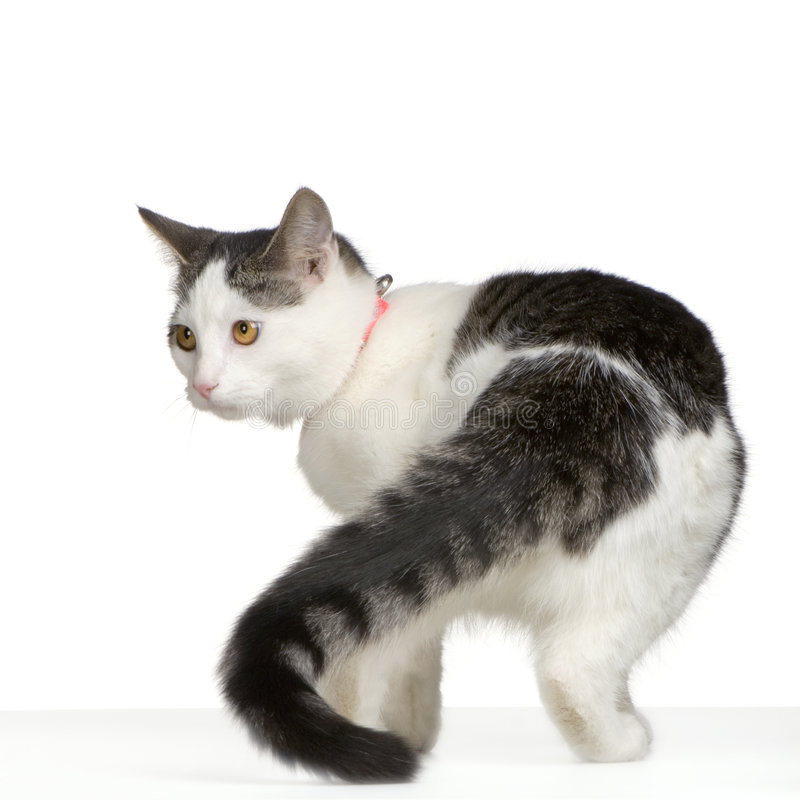Download Cat Stock Images - Image: 2314284