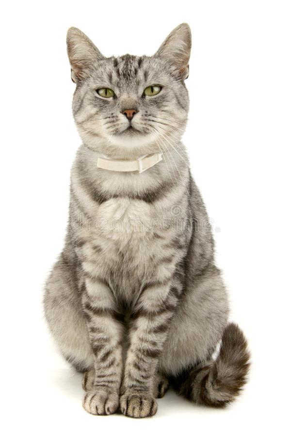 Cat. On white background stock photography