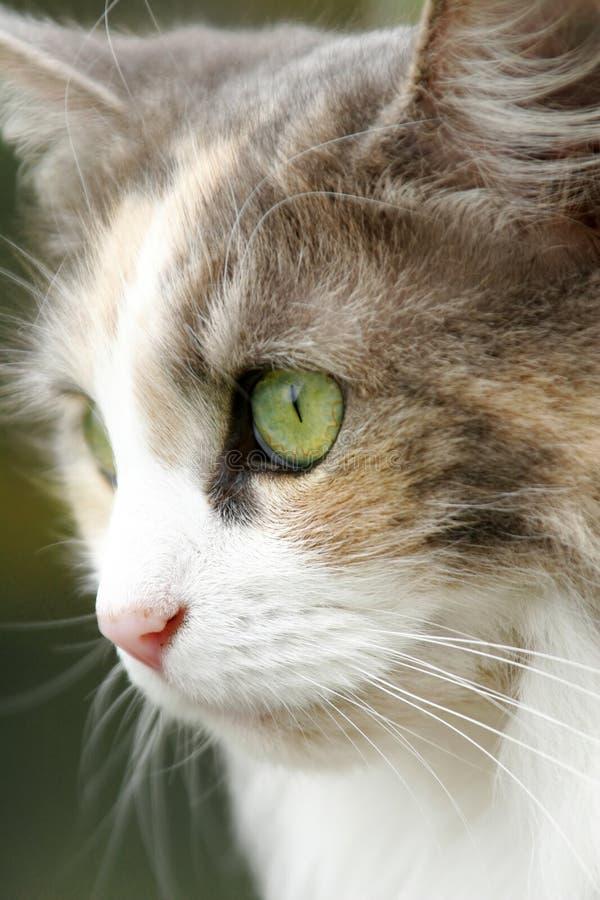 Download Cat Royalty Free Stock Image - Image: 2318486