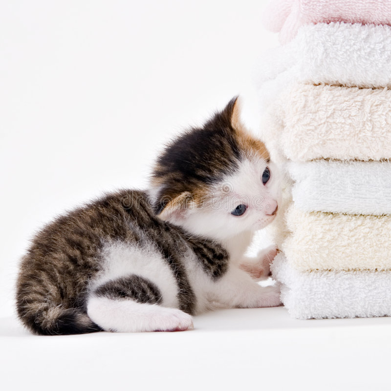 Download Cat Royalty Free Stock Images - Image: 2326839