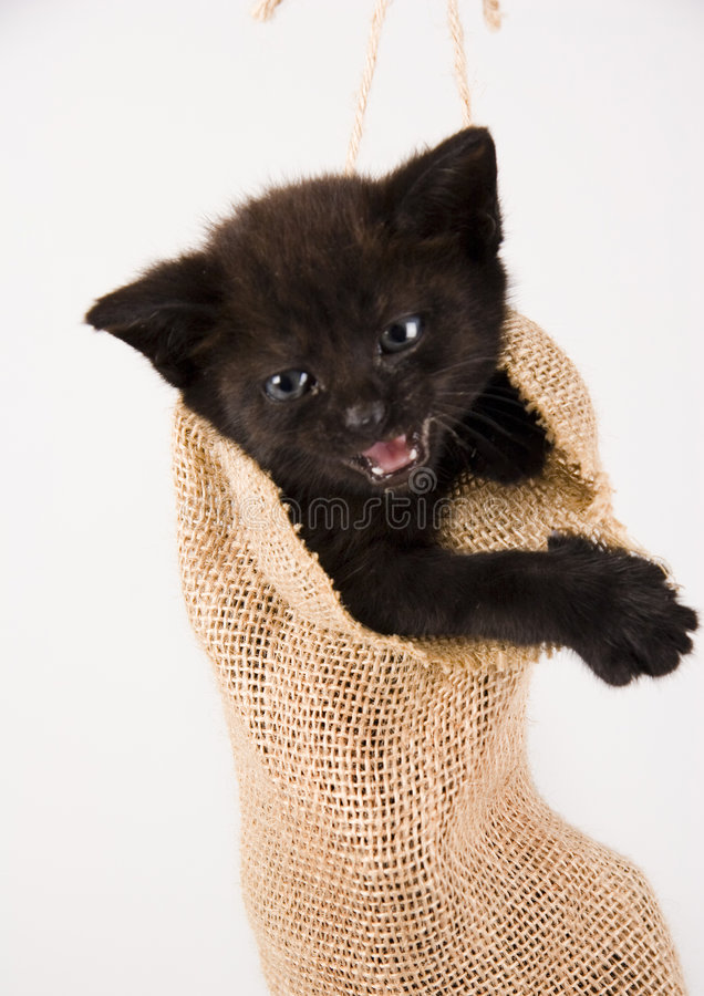 The cat. Cat - the small furry animal with four legs and a tail; people often keep cats as pets royalty free stock image