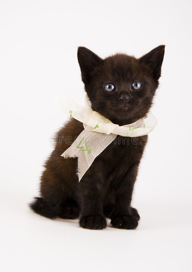 Cat. The small furry animal with four legs and a tail; people often keep s as pets stock images
