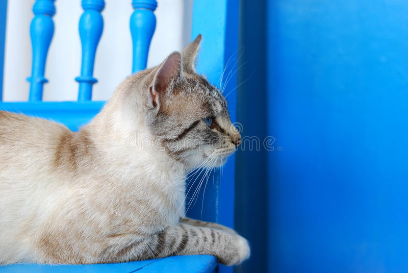 Download Cat stock photo. Image of striped, feline, domesticate - 24322556