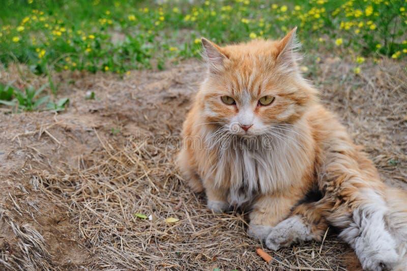 Download Cat stock photo. Image of looking, single, studio, alert - 24741426