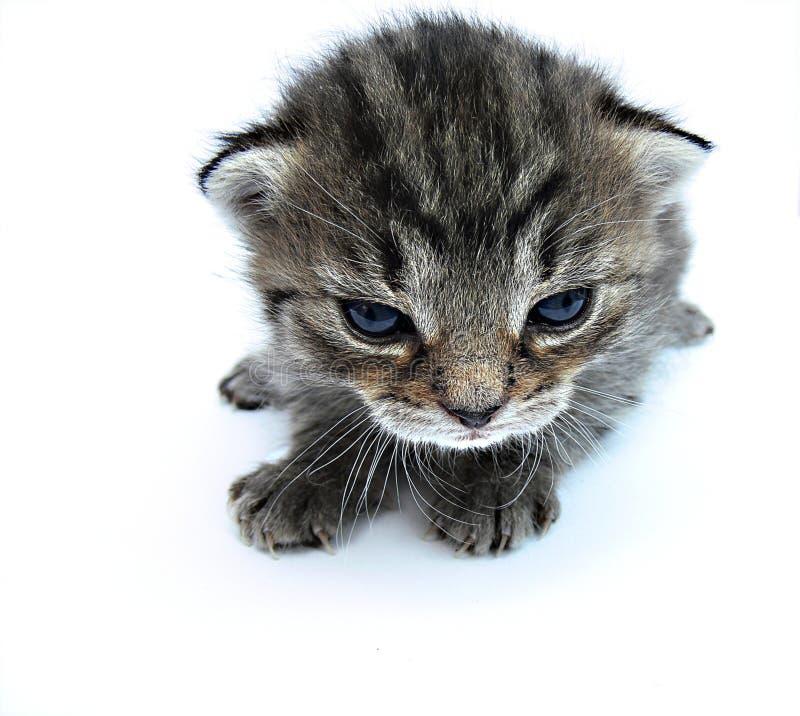 Free Cat Royalty Free Stock Photo - 2523175