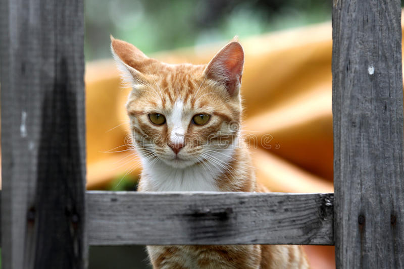 Download A Cat Stock Photography - Image: 25601512