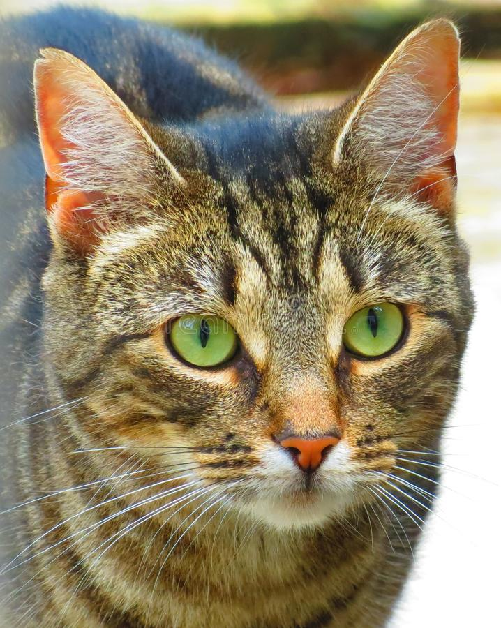 Download Cat stock photo. Image of close, look, details, profile - 26324698