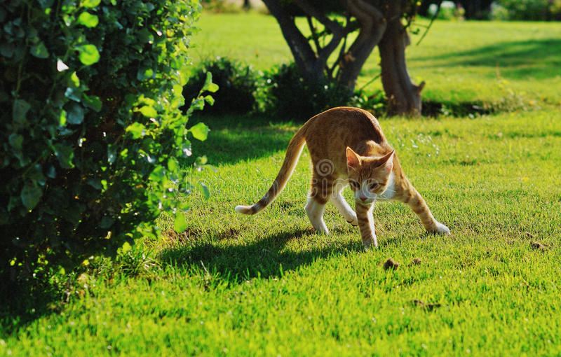 Download Cat stock photo. Image of animals, pets, green, cute - 26387012