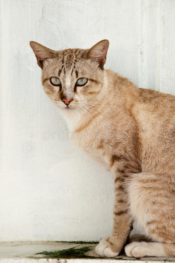 Download Cat Stock Image - Image: 26926001