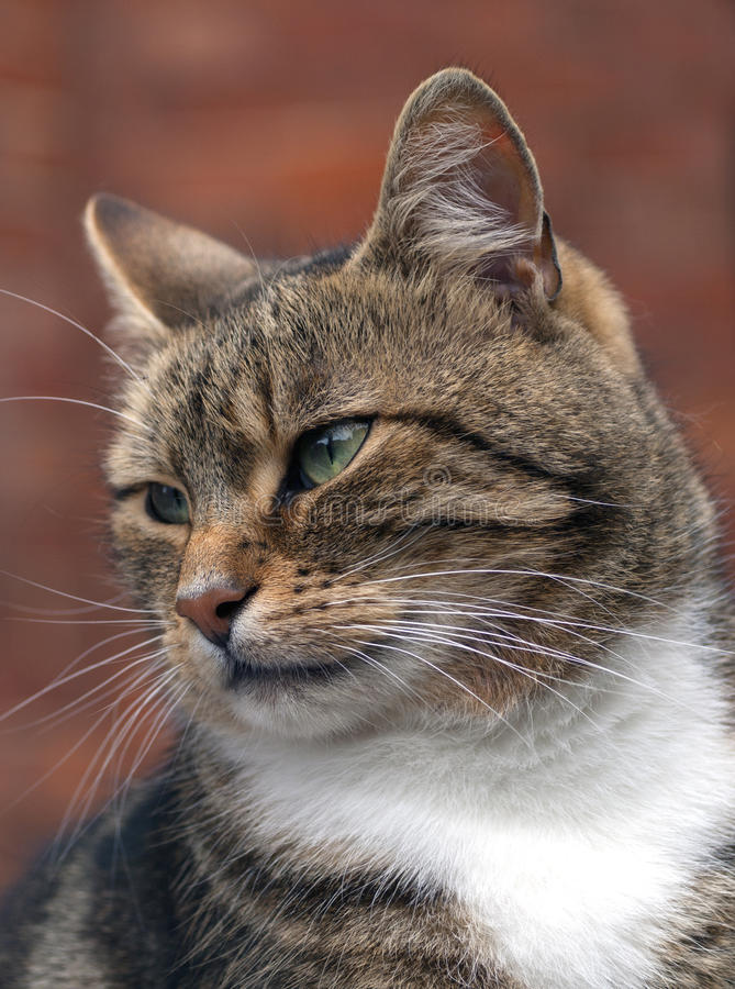Download Cat stock photo. Image of animal, male, face, nature - 27053842