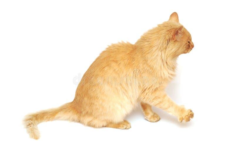 Download Cat Stock Image - Image: 27229701