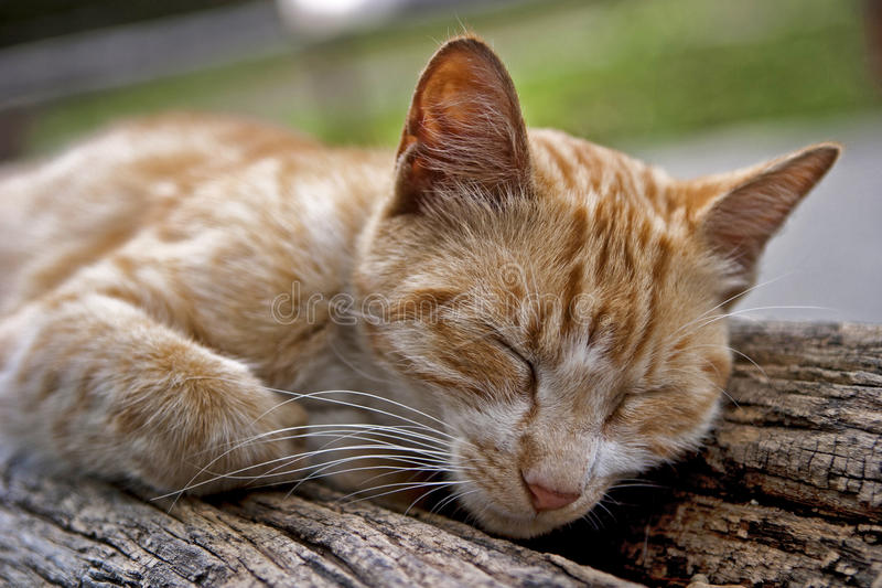 Download Cat stock image. Image of sleep, household, animal, portrait - 27514197
