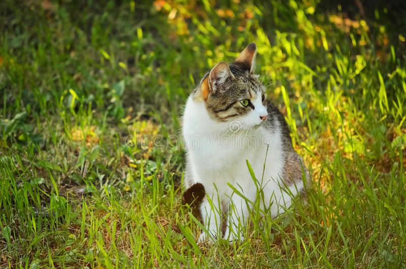 Cat. Stray Cat Sitting In The Green Grass stock images