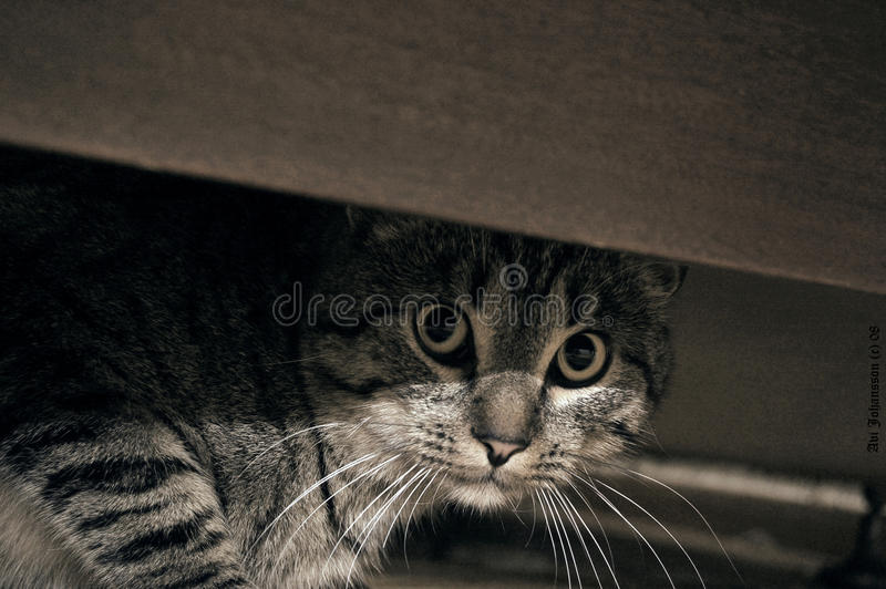 Download Cat stock image. Image of table, fluffy, fright, view - 27981917