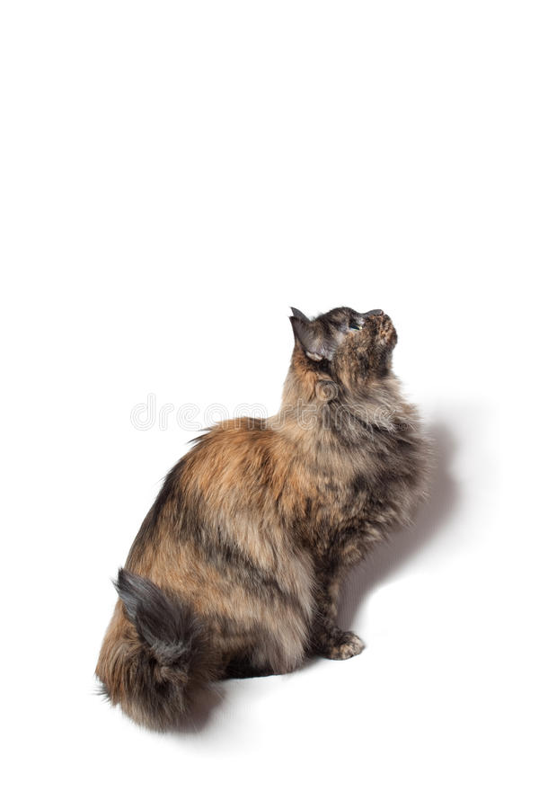 Download Cat stock photo. Image of looking, pussycat, cute, animal - 28239888