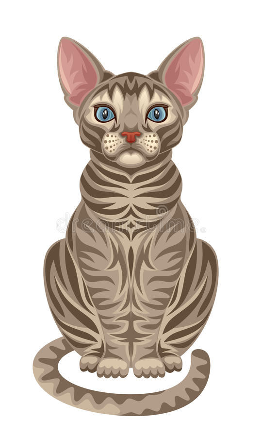 Download Cat stock vector. Illustration of nature, character, head - 28267657