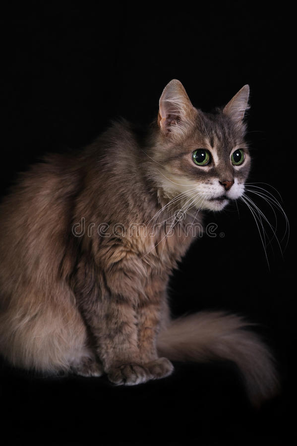 Download Cat stock photo. Image of sweet, furry, family, pets - 28575944