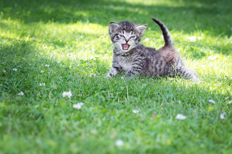 Download Cat stock image. Image of grey, cute, feline, outdoors - 28628429