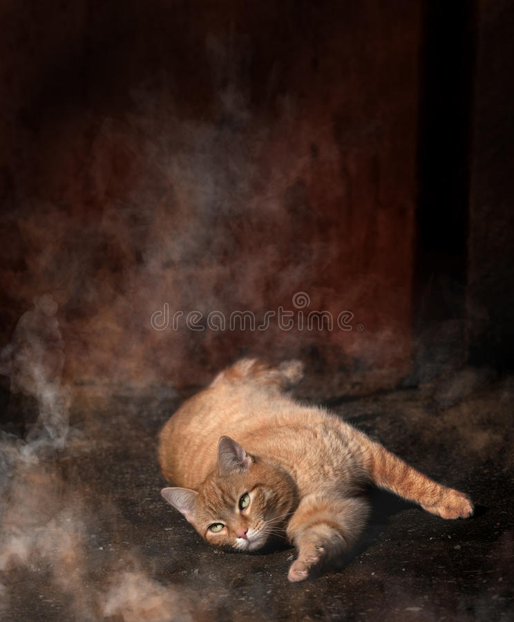 Cat. Lazy cat in the backyard royalty free stock image