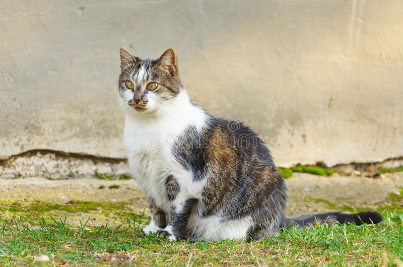 Cat. Is Sitting On The Grass Near The Grey Wall royalty free stock photos