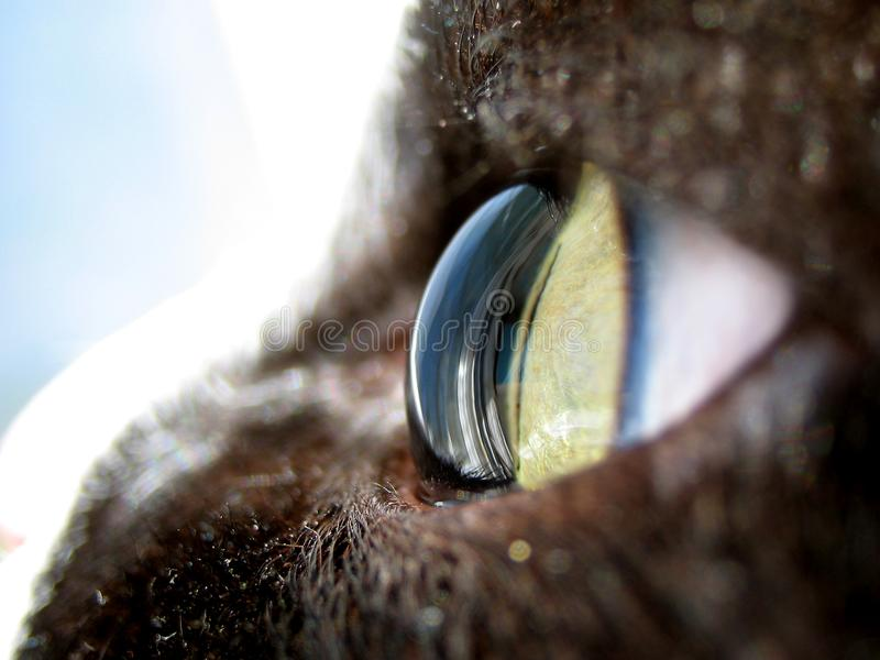 Download Cat stock image. Image of front, gold, 13th, carnivore - 2880351