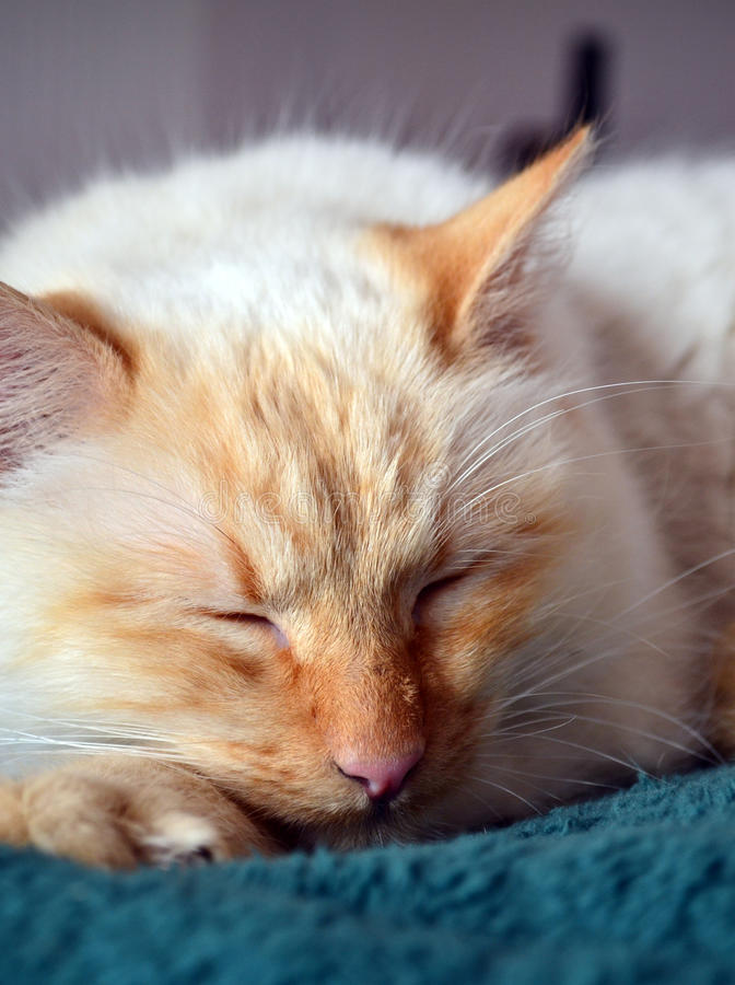 Download Cat Stock Photo - Image: 28830870