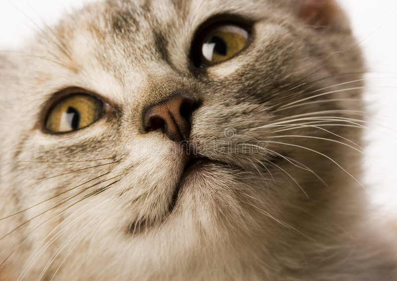 Cat. The small furry animal with four legs and a tail; people often keep s as pets royalty free stock photo