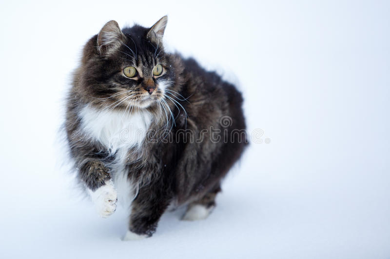 Download Cat stock photo. Image of gray, snow, white, frost, kitten - 29380870