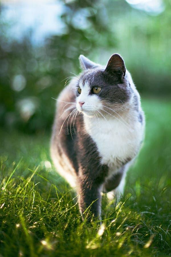 Cat-12 стоковая фотография