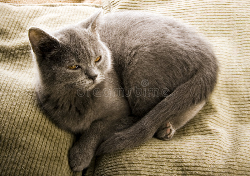 Cat. The small furry animal with four legs and a tail; people often keep s as pets stock photo