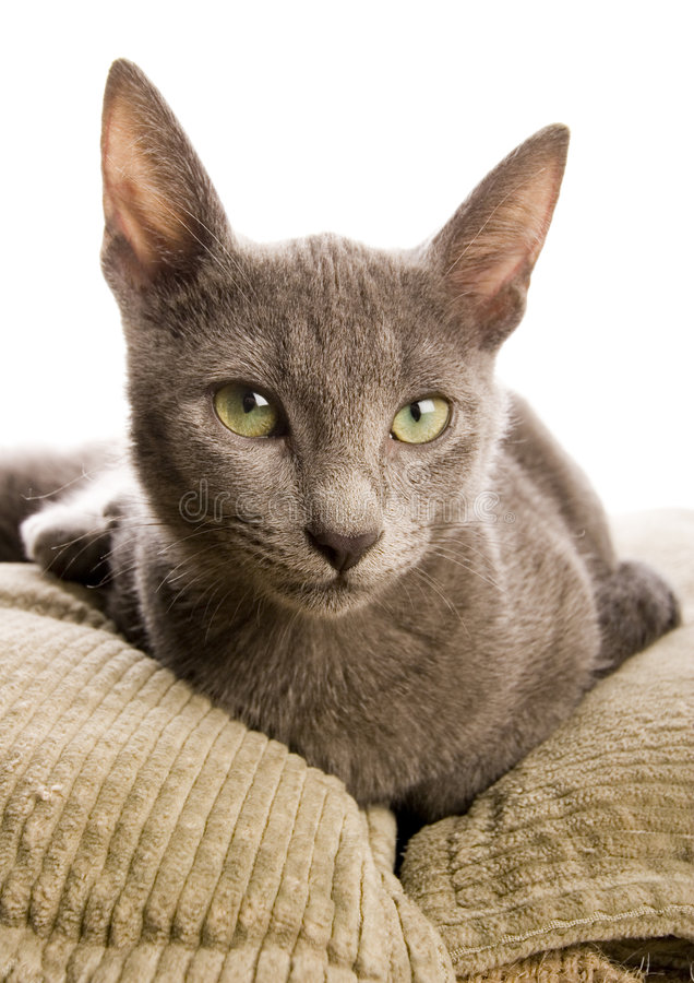 Cat. The small furry animal with four legs and a tail; people often keep s as pets royalty free stock photography
