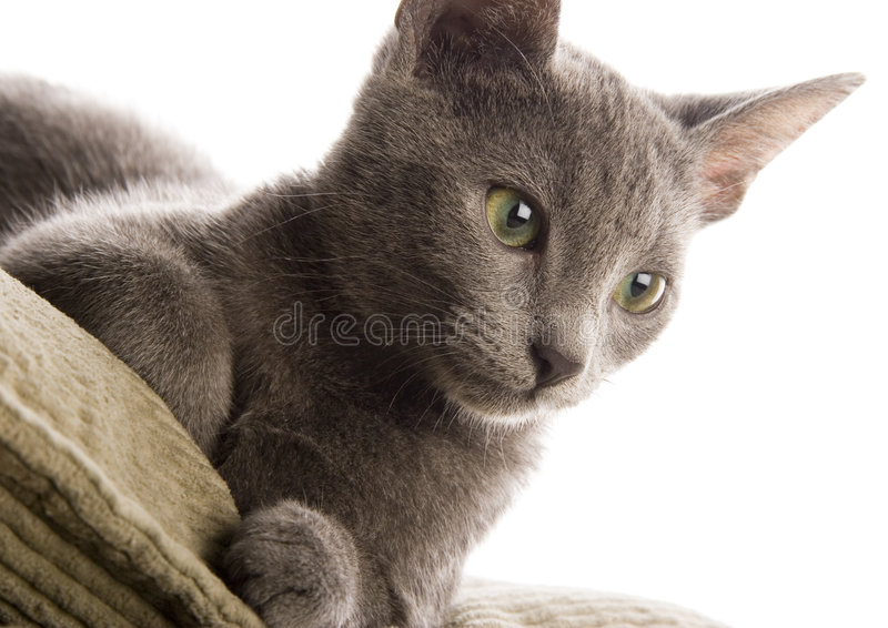 Cat. The small furry animal with four legs and a tail; people often keep s as pets stock image