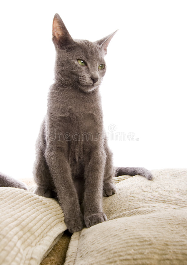 Cat. The small furry animal with four legs and a tail; people often keep s as pets stock photos