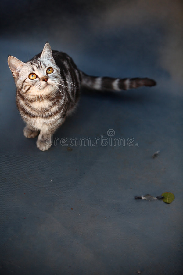 Cat. A young cat focus at something stock photos