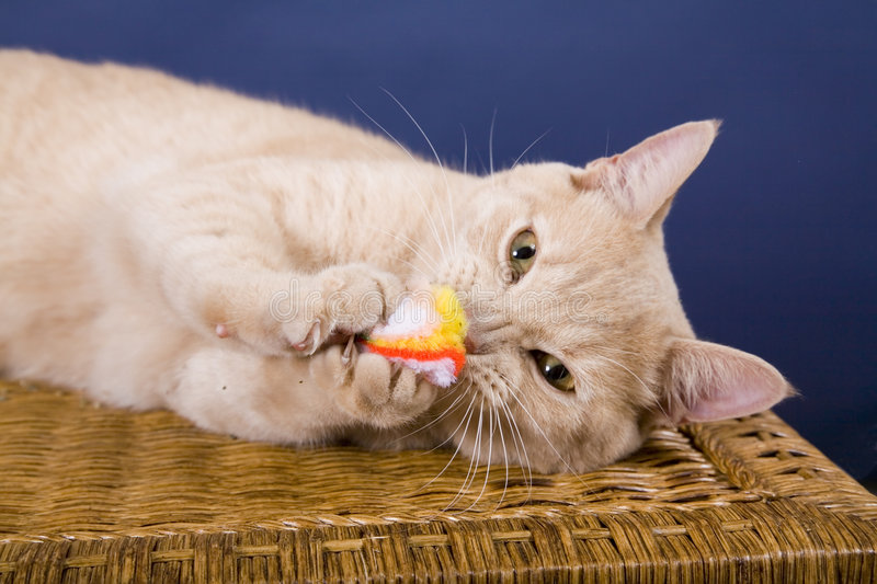 Download Cat stock image. Image of cute, cuddly, kitty, domestic - 453179